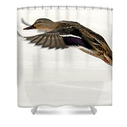 Shower Curtain featuring the photograph Taking Off by John Telfer