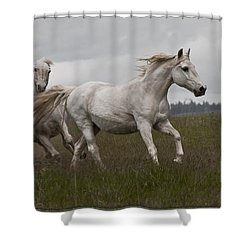 Talegating Shower Curtain by Wes and Dotty Weber