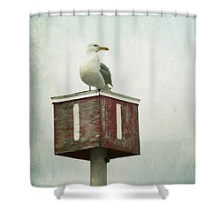 Shower Curtain featuring the photograph Gull With Blue And Red by Brooke T Ryan