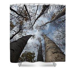 Tall Birch Circle Shower Curtain
