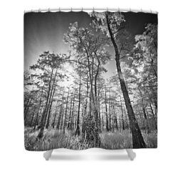Tall Cypress Trees Shower Curtain