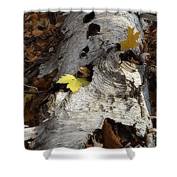 Tall Fallen Birch With Leaves Shower Curtain