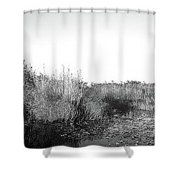 Tall Grass At The Lakeside, Anhinga Shower Curtain