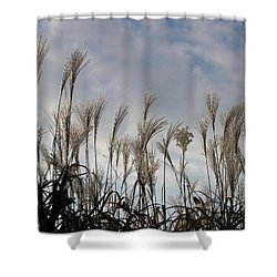 Tall Grasses And Blue Skies Shower Curtain by Dora Sofia Caputo Photographic Art and Design