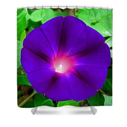 Tall Morning Glory Shower Curtain by William Tanneberger