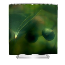Shower Curtain featuring the photograph Tallow Tree by Travis Burgess