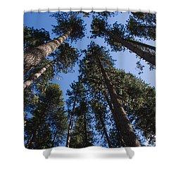 Talls Trees Yosemite National Park Shower Curtain