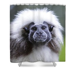 Shower Curtain featuring the photograph Tamarins Face by Shoal Hollingsworth