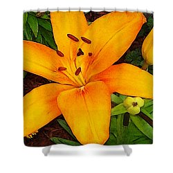 Shower Curtain featuring the photograph Tangerine Asiatic Lily by Shawna Rowe