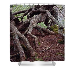 Tangled Roots Shower Curtain