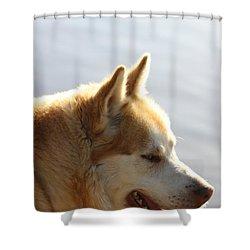 Tanka - Husky Shower Curtain by EricaMaxine  Price