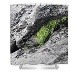 Shower Curtain featuring the photograph Tar  by Minnie Lippiatt