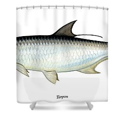 Tarpon Shower Curtain by Charles Harden
