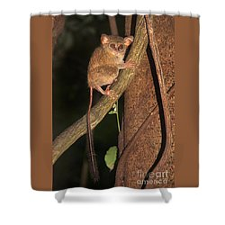 Tarsius Tarsier  Shower Curtain by Sergey Lukashin