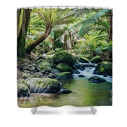 Tasmanian Rainforest Shower Curtain by Matteo Colombo