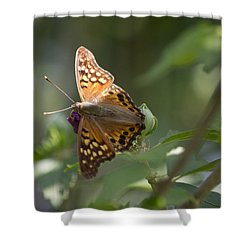 Tawny Emperor On Hibiscus Shower Curtain by Shelly Gunderson