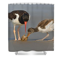 Shower Curtain featuring the photograph Teaching The Young by Jerry Fornarotto