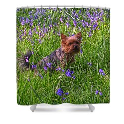 Teddy Amongst The Bluebells Shower Curtain