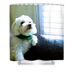 Teddy Shower Curtain by Robyn King
