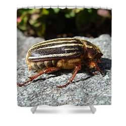 Ten-lined June Beetle Profile Shower Curtain