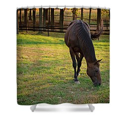 Tender Spring Grass Shower Curtain