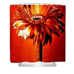 Tequila Sunrise Zinnia Shower Curtain by Sherry Allen