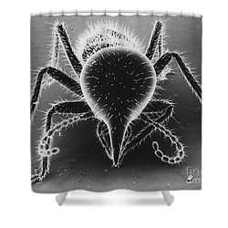 Termite Soldier Shower Curtain by David M. Phillips