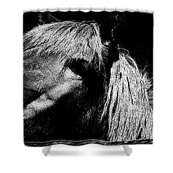Teton Horse Shower Curtain
