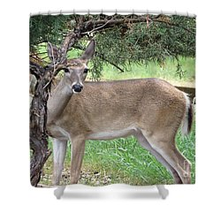 Shower Curtain featuring the photograph Texas Beauty - White Tail Doe by Ella Kaye Dickey