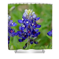 Texas Bluebonnets Shower Curtain by Debra Martz