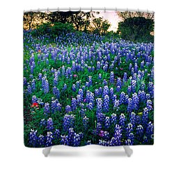 Texas Bluebonnet Field Shower Curtain by Inge Johnsson