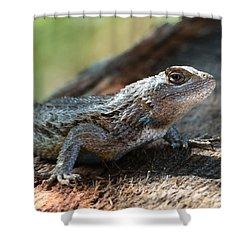 Texas Lizard Shower Curtain