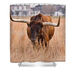 Texas Longhorn Shower Curtain by Louise Heusinkveld