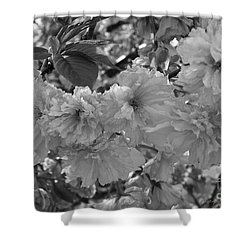 Shower Curtain featuring the photograph Textured Black And White Cherry Blossoms by Gena Weiser