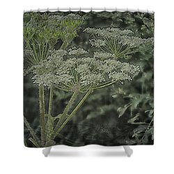 Shower Curtain featuring the photograph Textured Cow Parsnip by Sandra Foster