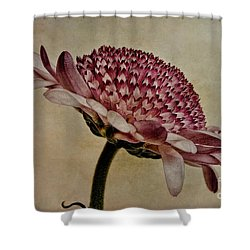 Textured Mum Shower Curtain by John Edwards