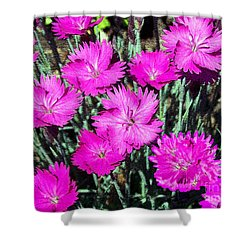 Shower Curtain featuring the photograph Textured Pink Daisies by Gena Weiser