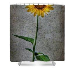 Textured Sunflower 1 Shower Curtain by Lori Deiter