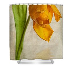 Textured Tulip Shower Curtain by John Edwards