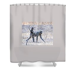 Shower Curtain featuring the photograph Thanks For The Ride Olive Baboon by Tom Wurl