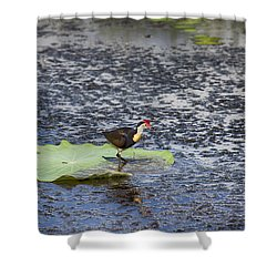 That Sinking Feeling Shower Curtain by Douglas Barnard