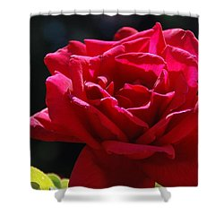 That Which We Call A Rose Shower Curtain by Eric Tressler