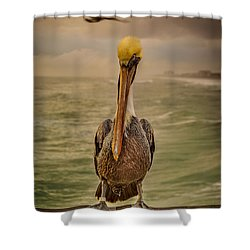 That's Mr. Pelican To You Shower Curtain by Steven Reed