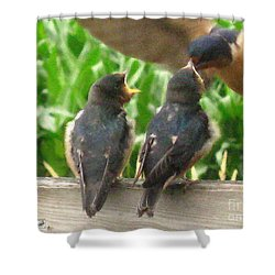 The Adult Barn Swallow Arrives With Lunch For One Shower Curtain by J McCombie