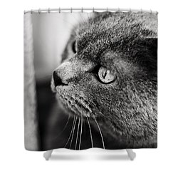 The Ambush Shower Curtain by Laura Melis