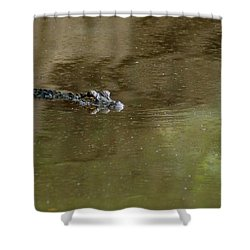 The American Alligator In The Flint River Shower Curtain by Kim Pate