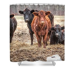 The Angry Cows Shower Curtain by Gary Heller