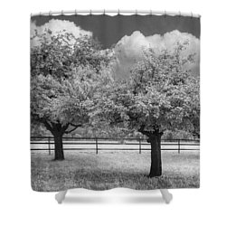 The Apple Orchard Shower Curtain by Debra and Dave Vanderlaan