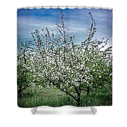 The Apple Tree Blooms Shower Curtain by William Havle