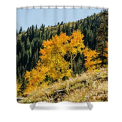 The Arch Shower Curtain by Sue Smith